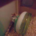 hamster0010